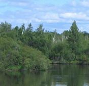 Всероссийский юниорский лесной конкурс «Подрост»