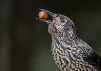 Фотоконкурс Государственного Дарвиновского музея «Из жизни птиц»