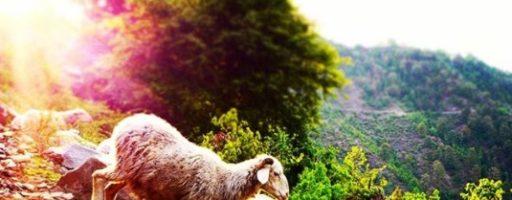 Конкурс от @fotospektrru: «Светлый праздник Пасхи»