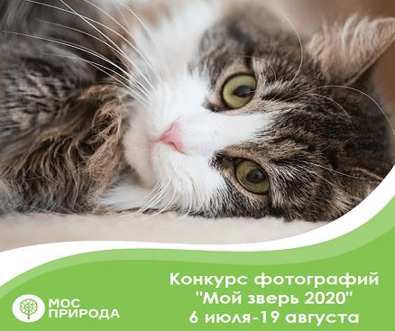 Конкурс фотографии «Мой зверь 2020»