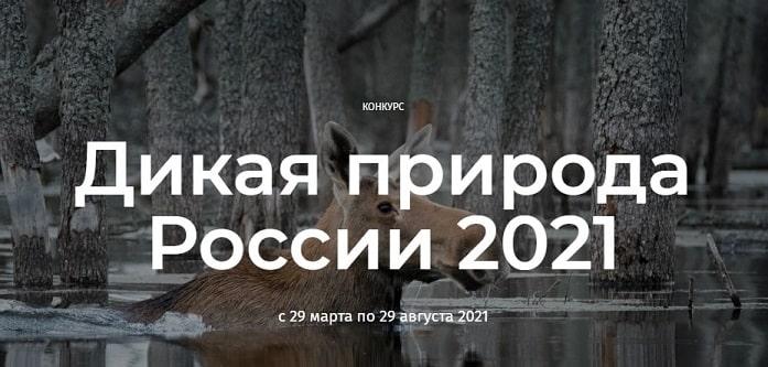 Конкурс «Дикая природа России 2021»