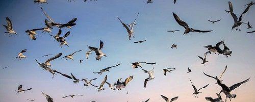 Международный конкурс фотожурналистики имени Андрея Стенина