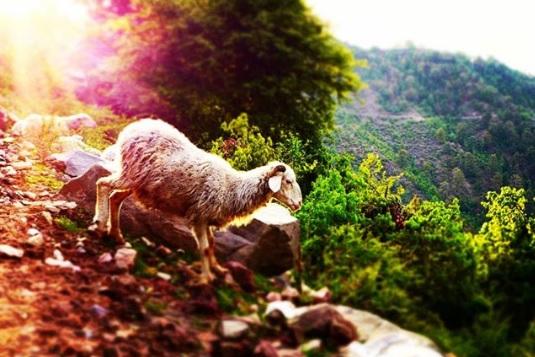 """Конкурс от @fotospektrru: """"Светлый праздник Пасхи"""""""