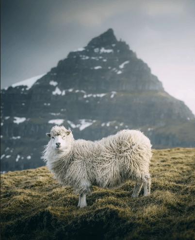 лучшие фото 2019 года по версии national geographic